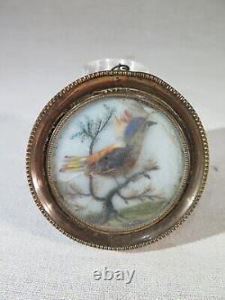 Ancien Cadre Miniature Peinte Oiseau A Feathers Veritables Epoque Debut XIX Eme
