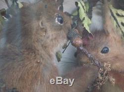 Diorama Stuffed Squirrel On Branch Xixth