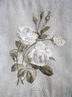 DESSIN ORIGINAL-FLEUR-ROSE-L. CAPITAINE-BOTANIQUE-EPOQUE FIN XIX eme-1/2